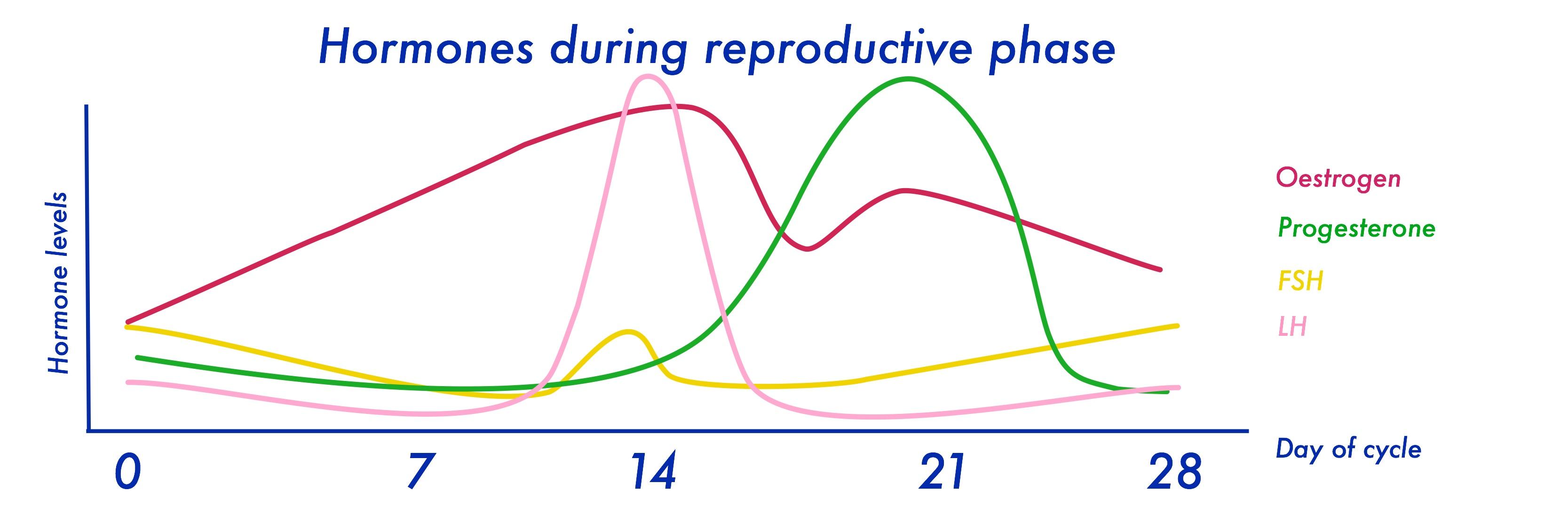 Hormones#2